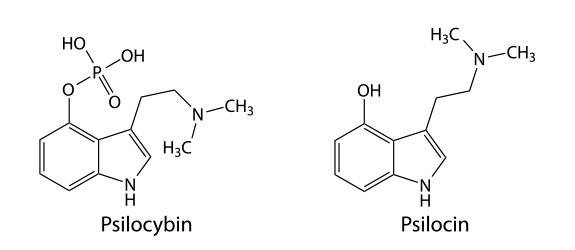 Chemical structures of psilocybin and psilocin