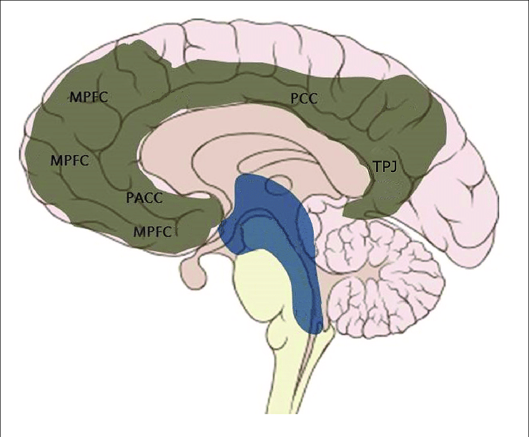 The Midline Structures of the Brain Involved with the DMN